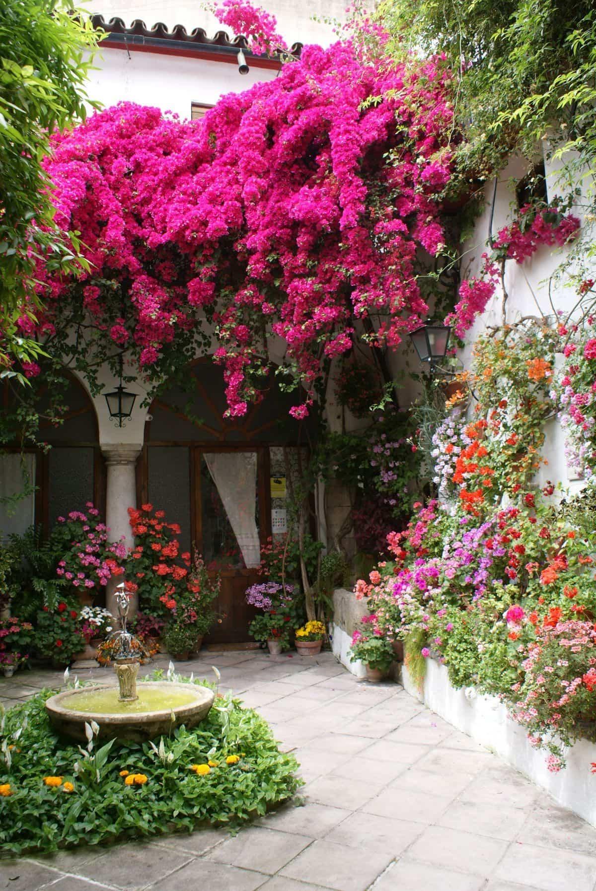 llena tu hogar de color con buganvillas 6