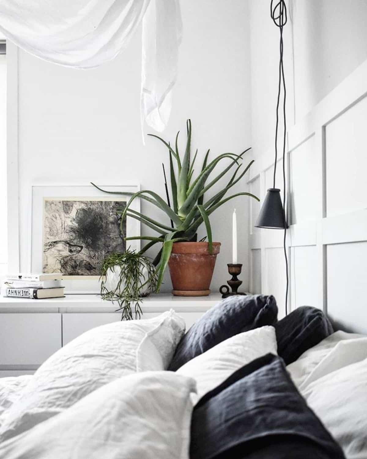8 plantas perfectas para el dormitorio 3