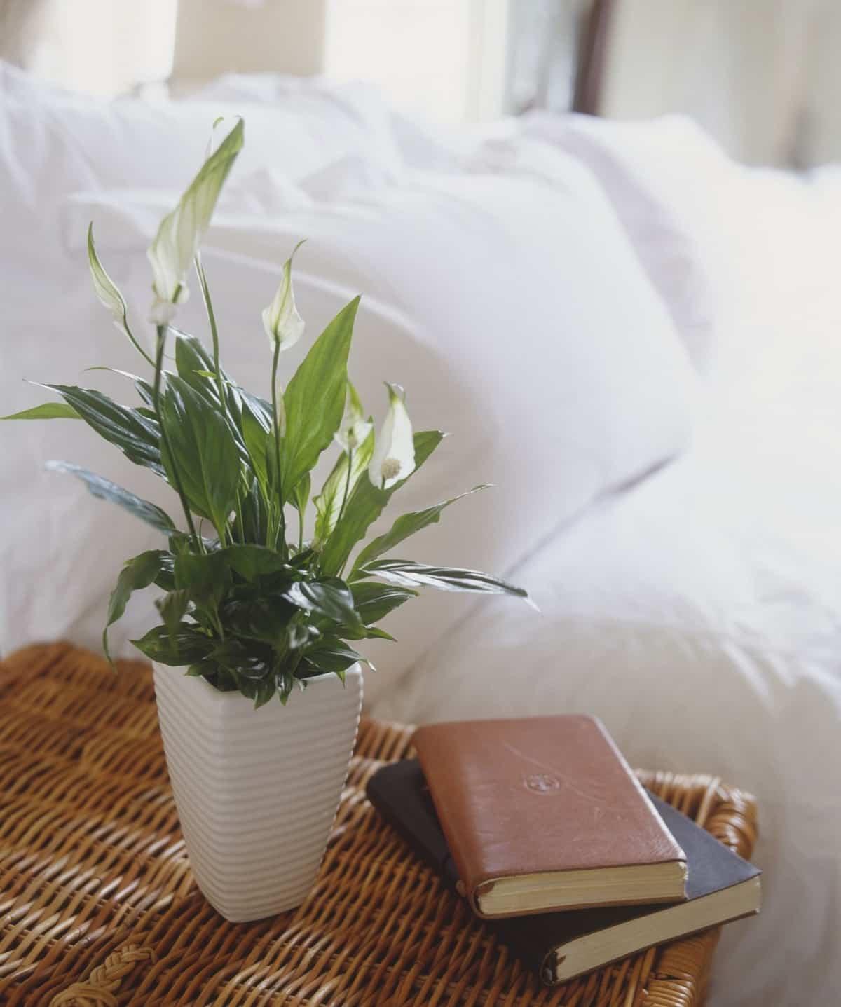 8 plantas perfectas para el dormitorio 5