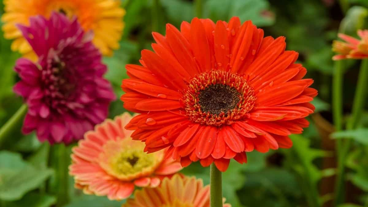 plantas de verano resistentes al sol y al calor 1