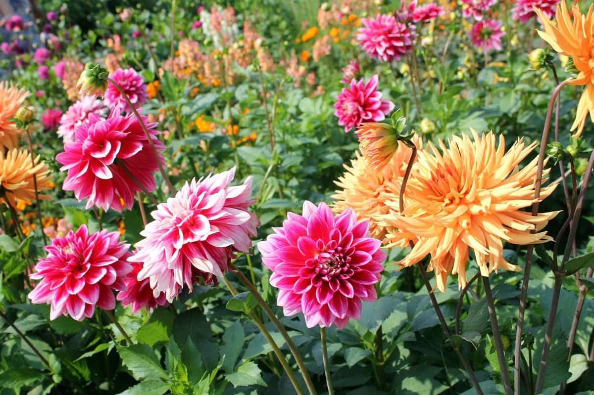 plantas de verano resistentes al sol y al calor 3