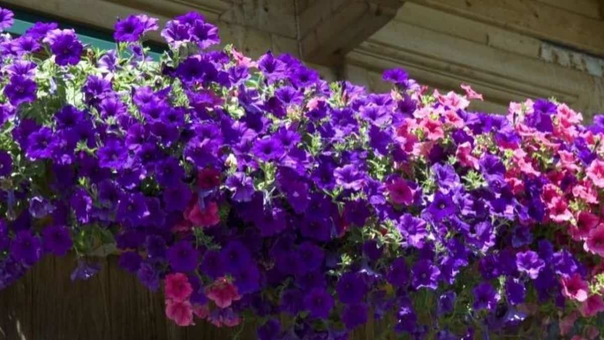 plantas de verano resistentes al sol y al calor 5