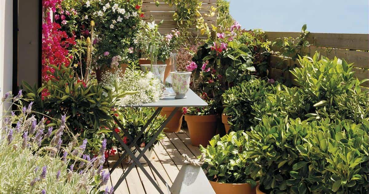 plantas de verano resistentes al sol y al calor 6