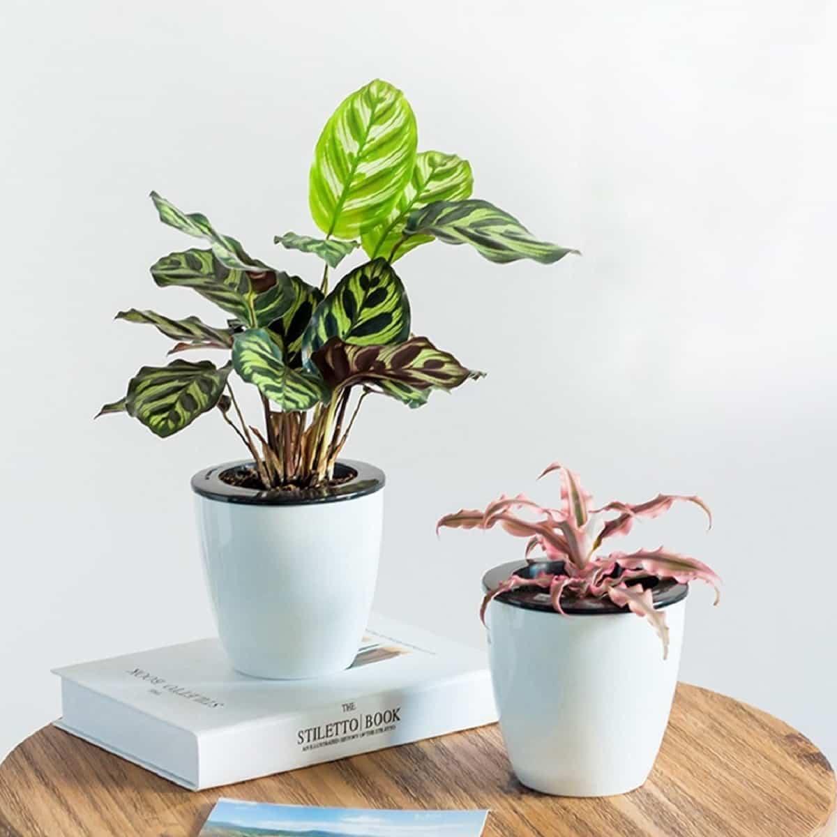trucos para regar las plantas si te vas de vacaciones 2