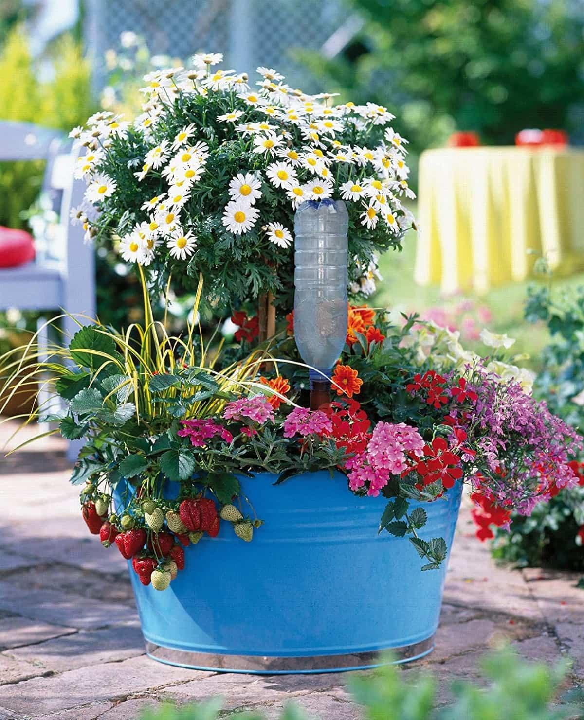trucos para regar las plantas si te vas de vacaciones 3