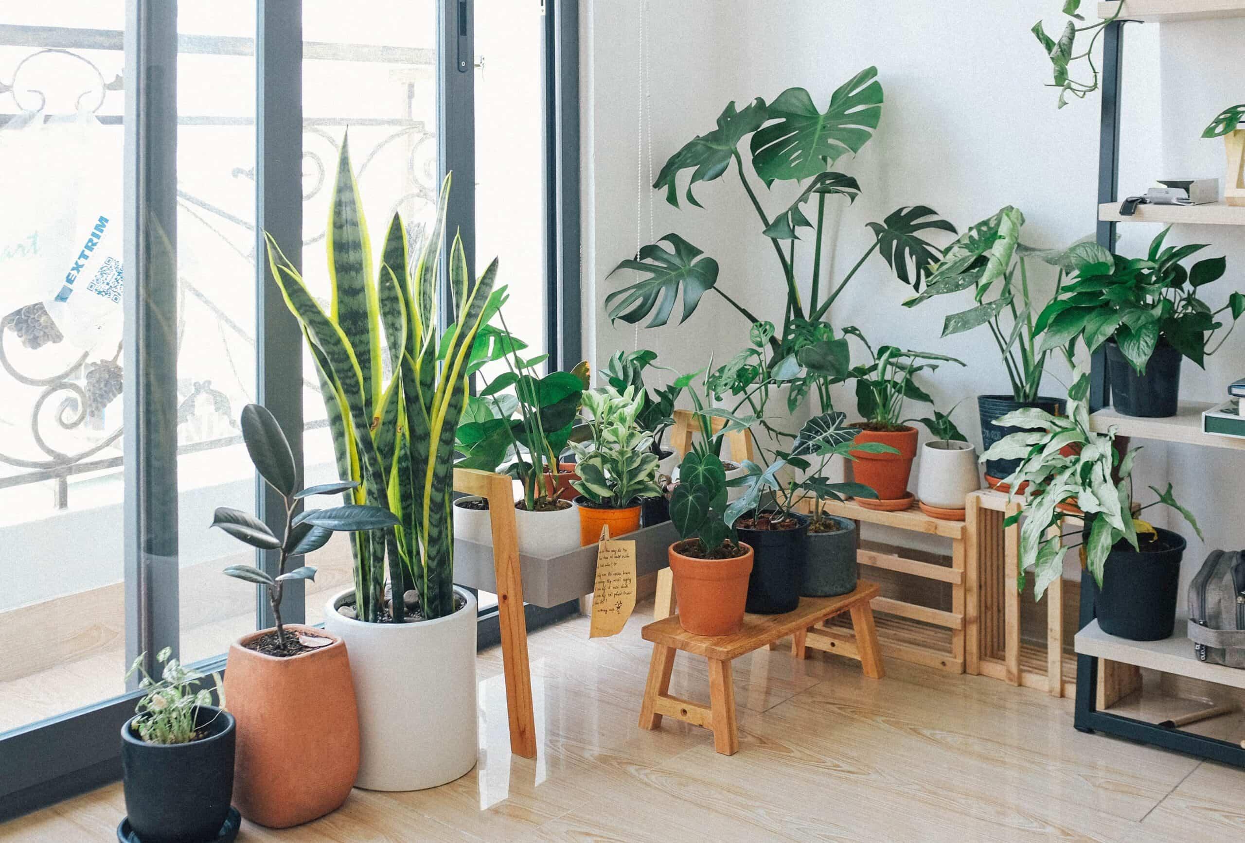 trucos para regar las plantas si te vas de vacaciones 5