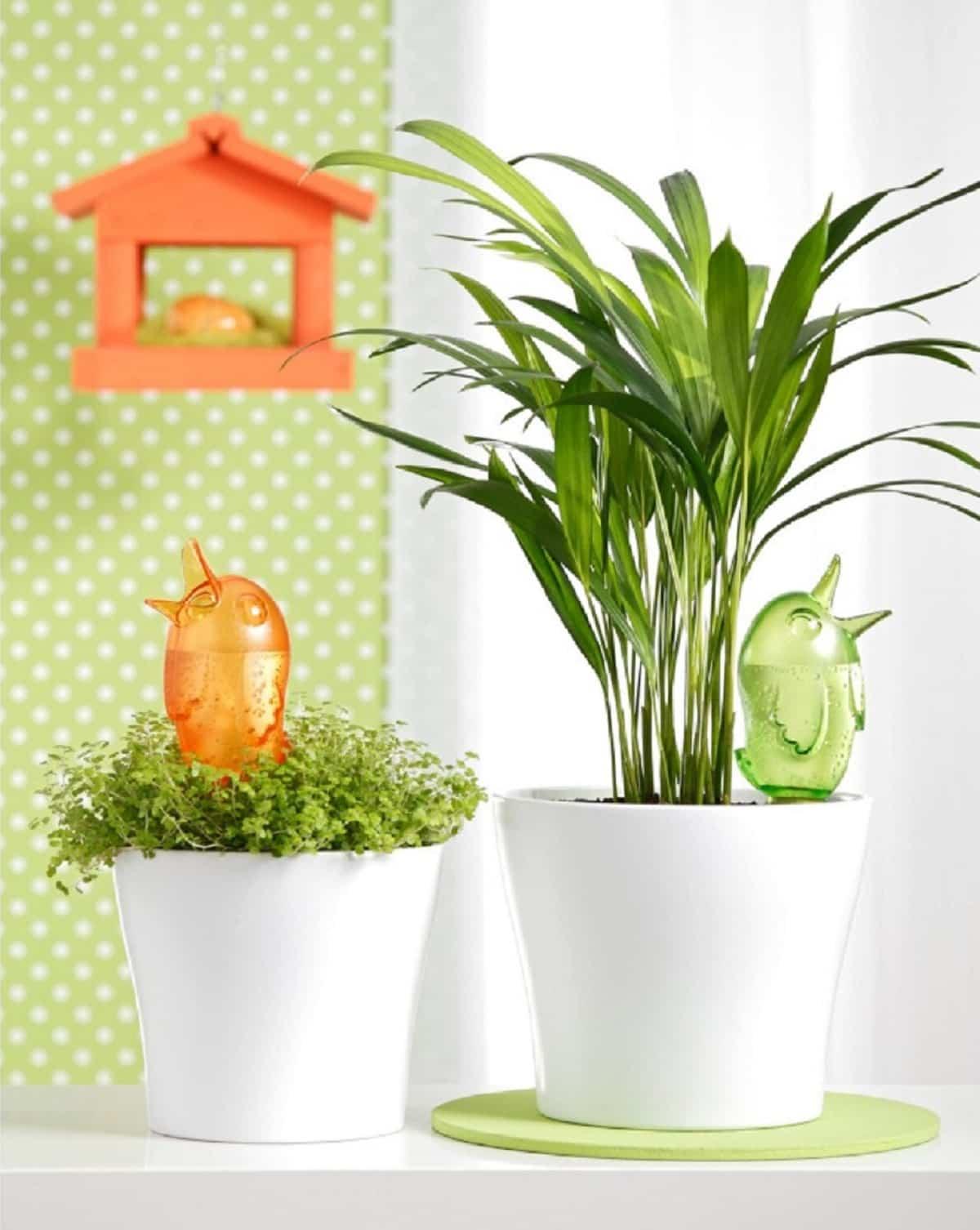trucos para regar las plantas si te vas de vacaciones 6